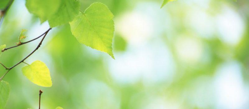 Fresh_green_leaves