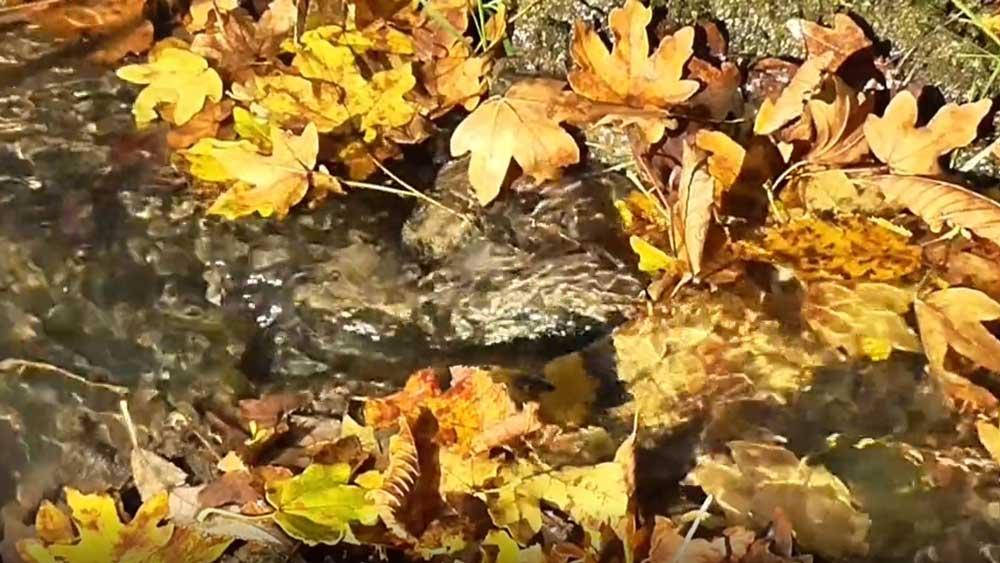 Homepage riviertje in de herfst